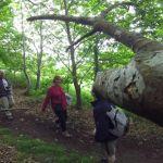 Fantastique Vallée des Traouïero : visite guidée Trégastel
