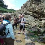 Sortie découverte des algues et atelier culinaire Plouha