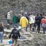 Sortie nature et patrimoine- \La vie à marée basse\ Pléneuf-Val-André