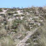 Découverte des dunes de Keremma. Tréflez