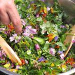 Conférence : \Légumes anciens : perpétuels, sauvages ... et fleurs à manger ...\ Pleurtuit