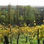 Documentaire: Vin nature, vin vivant de Rino Noviello Morlaix