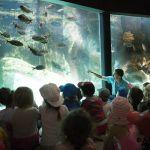 Visite guidée de l\Aquarium Marin Trégastel