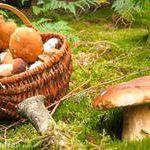Rando cueillette champignons Plédéliac