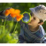 Balade Nature : A la découverte des plantes sauvages MAURON