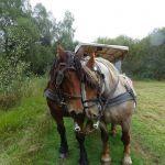 Voyage dans Les Landes de Bretagne MONTENEUF