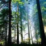 Forêts Saint-Nazaire