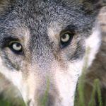 Randonnée contée: Huche Loup et Loup Pendu ! Paimpont