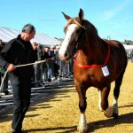 Concours agricole de la Saint-Luc Plouescat