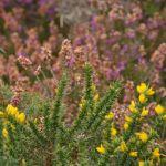 Sortie botanique Locarn