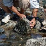 Balade découverte des animaux du bord de mer Pordic